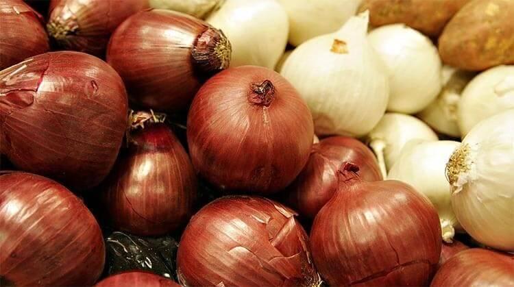Le proprietà più importanti della cipolla